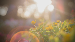 yellow flower and sun beams